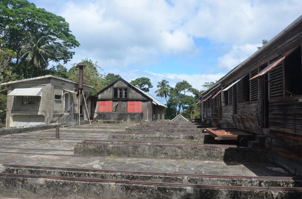 Proces suszenia kakaowca