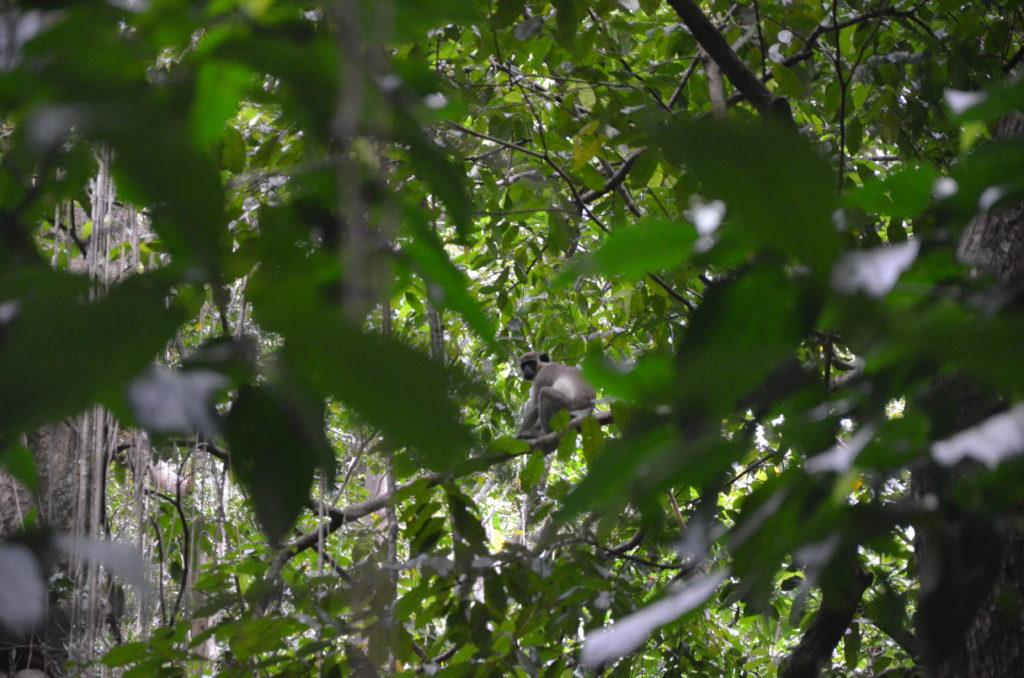 Małpy w lesie deszczowym