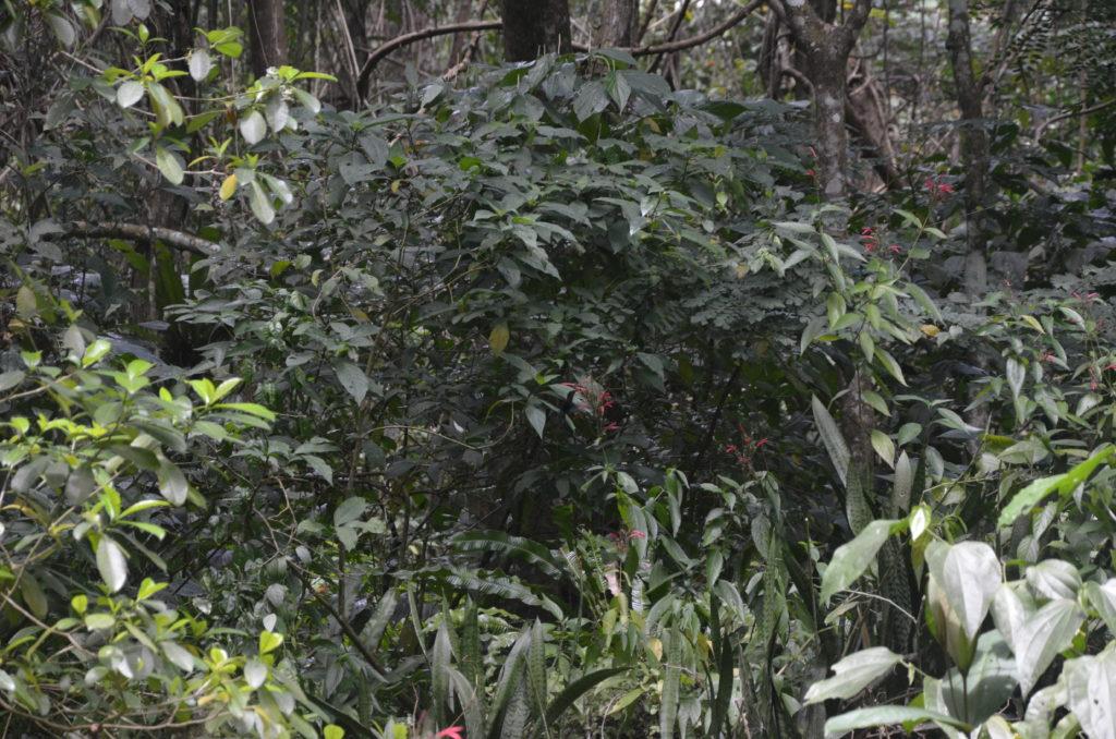 Roślinność w lesie deszczowym