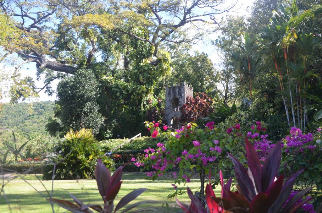 Kwiaty w Romney Manor