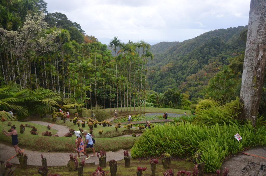 Martynika ogród botaniczny