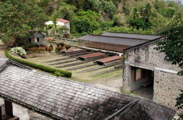 Plantacja kakaowca
