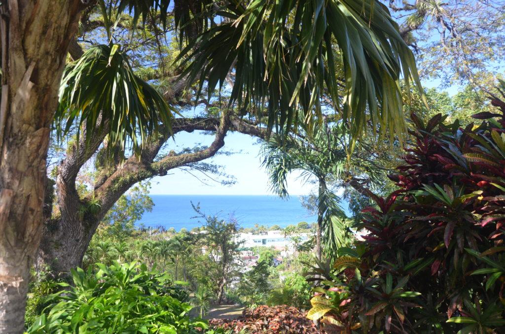 St Kitts ogród botaniczny