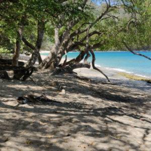 Czy Bequia na Karaibach to wyspa idealna?