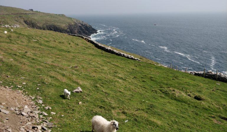 Półwysep Dingle Irlandia