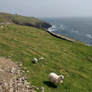 Półwysep Dingle - prawdziwa perła Irlandii
