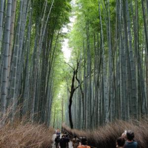 Arashiyama - najpiękniejsze miejsce w Kioto