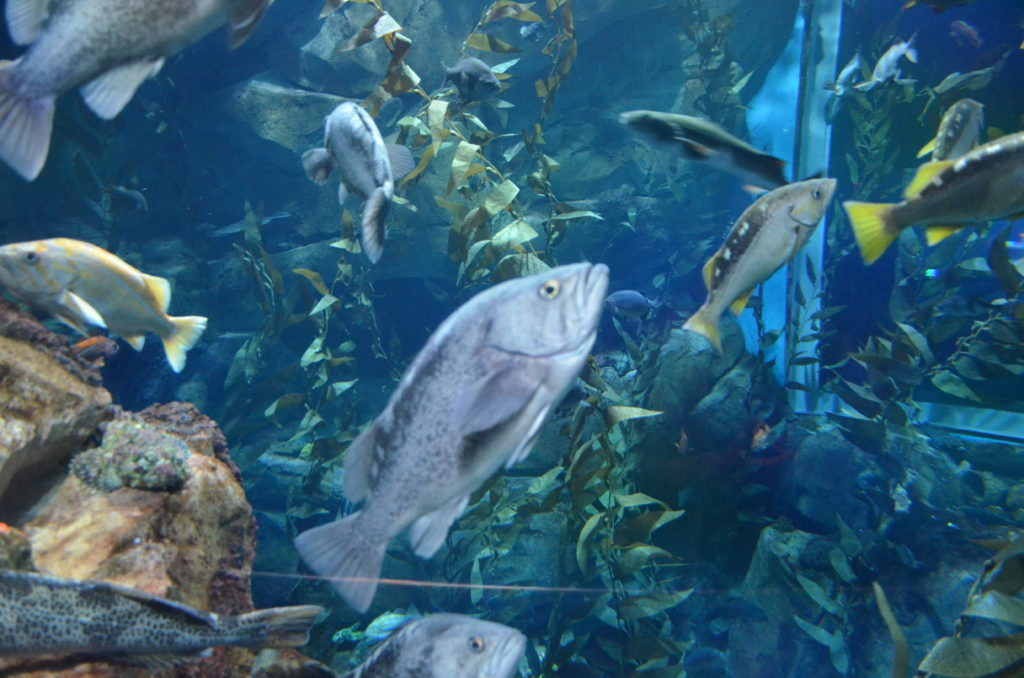 Akwarium Toronto