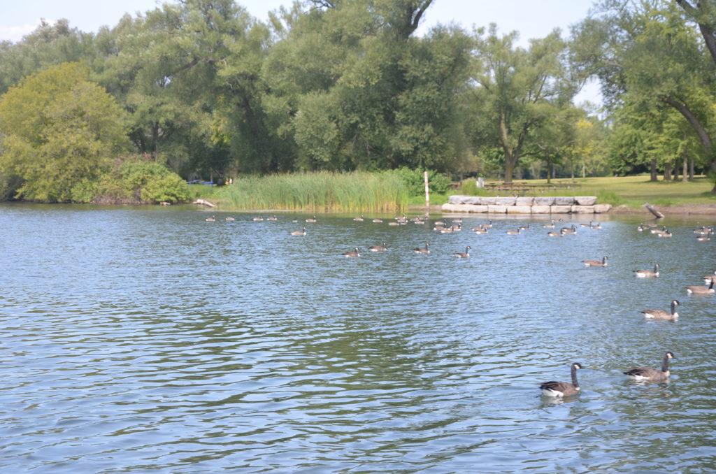 Jezioro Ontario