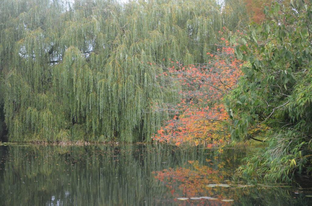 Ogrody Botaniczne Cambridge