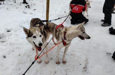 Husky Rovaniemi