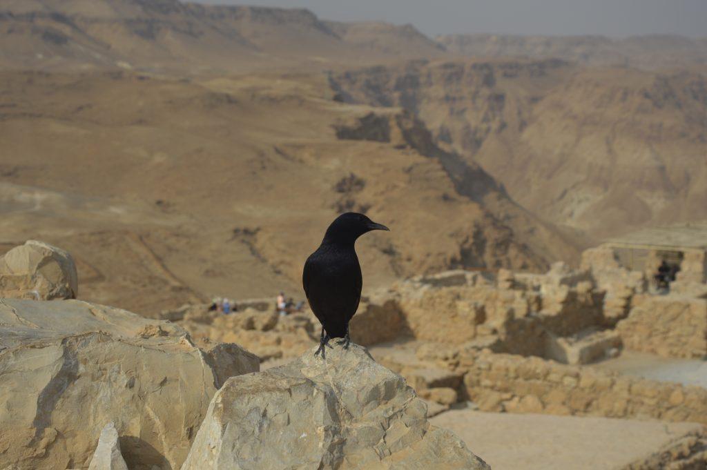 Masada w Izraelu