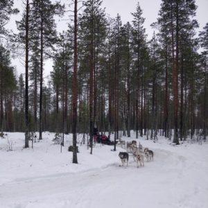 7 aktywności zimowych, które możesz wypróbować w Skandynawii