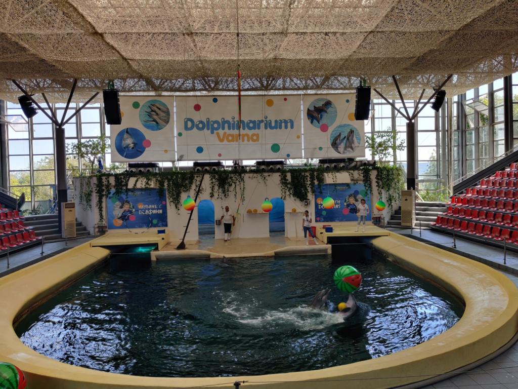 Delfinarium Warna